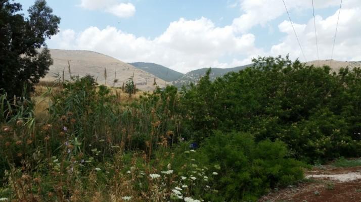 טיול בעמק המעיינות ובילוי בסחנה