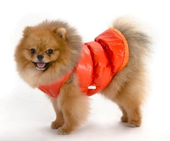 מותג האופנהRIBOSמבית ביופטמשיק את קולקציית הביגוד החדשה לכלבים לעונת החורף 2017-2018
