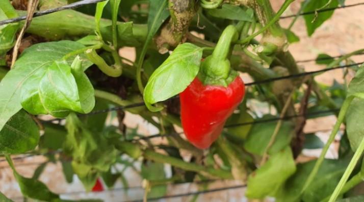סיורים חקלאיים וקטיף עצמי ברמת השרון - שיתוף פעולה של ירק השדה ומשק קנטור